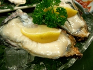 raw-oysters